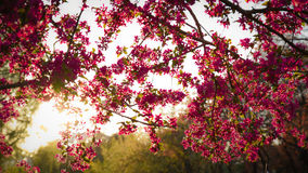 dof ανθών αζαλεών στενή ρηχή άνοιξη λουλουδιών επάνω στοκ φωτογραφία με δικαίωμα ελεύθερης χρήσης