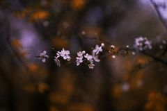 dof ανθών αζαλεών στενή ρηχή άνοιξη λουλουδιών επάνω Στοκ εικόνα με δικαίωμα ελεύθερης χρήσης