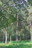 dof πάρκο ρηχό Στοκ εικόνες με δικαίωμα ελεύθερης χρήσης