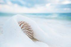 在白色海滩沙子的舡鱼壳反对海挥动,浅dof 免版税库存图片