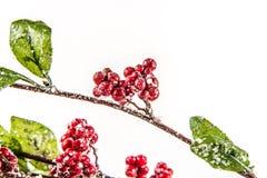 фронт фокуса dof рождества ягод разбивочный отмелый Стоковые Фото