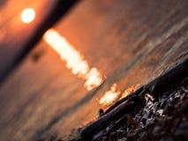 DOF bajo: madera de deriva que pone en la orilla del río Danubio, puesta del sol hermosa Imagen de archivo libre de regalías