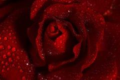 dof bliżej ciemności skrajnego kropelek podobieństwo czerwoną różę makro, płytkie wody Zdjęcie Royalty Free