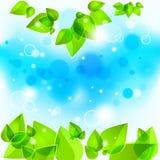 dof-greenleaves blir grund fjädern Arkivfoto