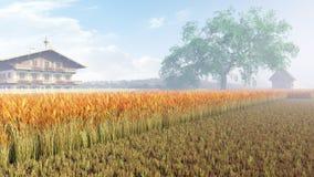 dof pola pszenicy pionowe złota płytka Zdjęcia Stock