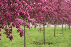 dof sadu fotografii sepia płycizny wiosna brzmienie Zdjęcia Stock