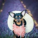 Dof un agricoltore, un americano, un cowboy Ritratto di un cane in una cicatrice Immagine Stock