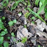 dof zieleni liść płytka wiosna Obrazy Royalty Free