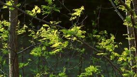 dof zieleni liść płytka wiosna zdjęcie wideo