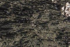 Doft på den gröna stenen Arkivbild