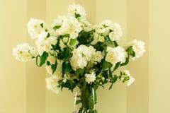 Doftande bukett av den vita jasmin i en vas fotografering för bildbyråer