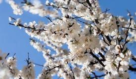 Doften av den blommande våren royaltyfri fotografi
