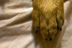 Dog's-Bein Stockbilder