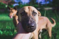 Dog& émouvant x27 de main ; tête de s avec amour Images libres de droits