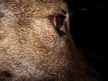dog& x27 ομορφιά του s Στοκ φωτογραφία με δικαίωμα ελεύθερης χρήσης