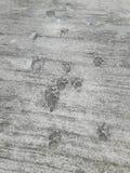 Dog& x27; 在干水泥的s脚印 免版税库存照片