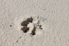 Dog& x27; 在沙子的s脚印 免版税库存图片