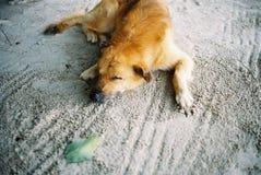 Dog& x27; 睡觉在海滩的s 免版税库存照片