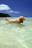 The dog. This is the dog playing in sea royalty free stock image