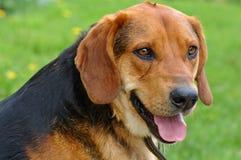 dog Στοκ εικόνα με δικαίωμα ελεύθερης χρήσης
