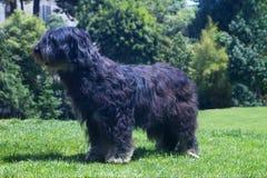 Free Dog Stock Photos - 1104203