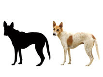 Dog. Detail of image contain dog , with shape and this contain their clipping path Royalty Free Stock Photo