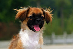Dog. A feature article photography puppy Stock Photography