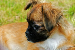 Dog. A feature article photography puppy Royalty Free Stock Photo
