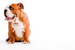 Free Dog Royalty Free Stock Photos - 11702298
