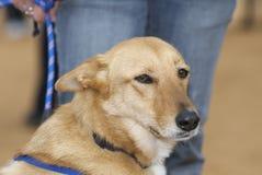 Free Dog Stock Photos - 11987413