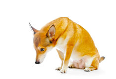 Free Dog Royalty Free Stock Images - 13541949
