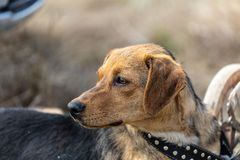 Portrait of furry young dog looking aside stock photos