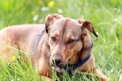 Free Dog Stock Images - 14652734