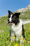 Dog. A dog on the meadow Royalty Free Stock Photos