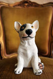 A dog. On the luxury chair Stock Image