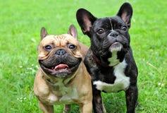 Dog Royalty Free Stock Photo