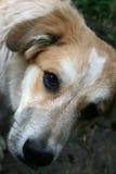 Dog. The dog`s portrait, courtyard guard Stock Photo