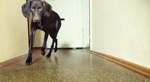 Free Dog Stock Photography - 16718802