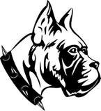 Dog. The   black  white image of dog of breed  boxer Stock Photography