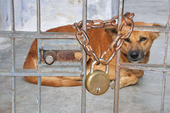 Dog. Detail of image contain dog  with gate Stock Image