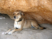 Dog. A dog seating on the sand gazing stock image