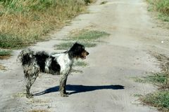 Dog. Dirty dog on a path with grass Royalty Free Stock Photography