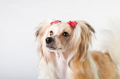 Dog Royalty Free Stock Image