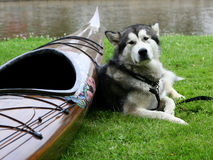 Dog. With boat Stock Photo