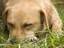 Dog. Pet stock photography