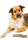 Dog. Mixed breed dog on white background stock photography