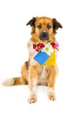 Dog. With flowers on white background Royalty Free Stock Photography