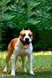 A dog Royalty Free Stock Image