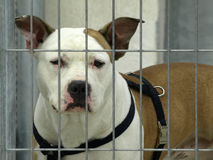 Dog. Dangerous dog in a jail Stock Image