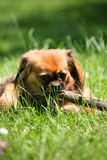 Dog. Little tired dog after playing with a stick stock images